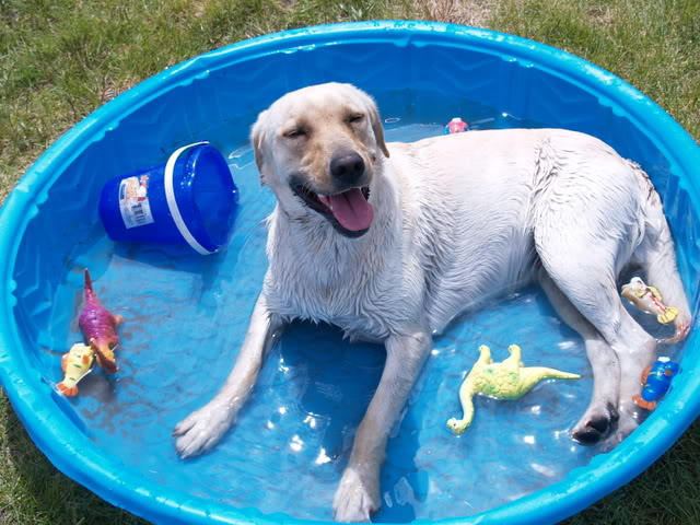 Buying a dog swimming pool - TIPS