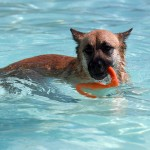 Can Dogs Swim In Chlorine Treated Pool?
