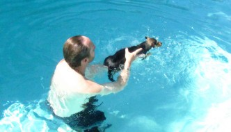 Teach Your Dog How to Swim in the Pool