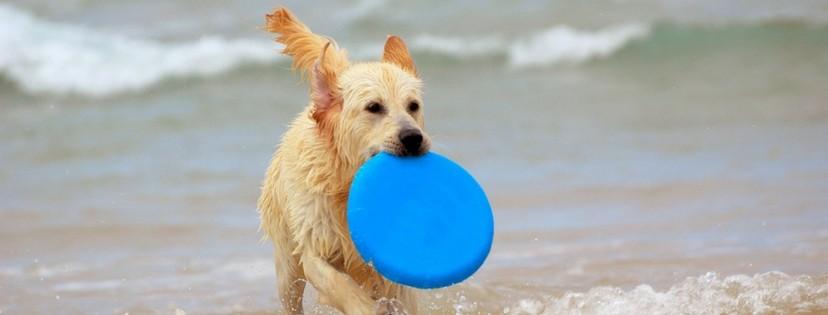 Water Frisbee pooladvisors